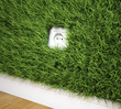 An electrical socket on a grass covered wall