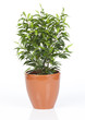 plante verte dans pot orange