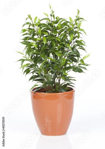 plante verte dans pot orange de studiophotopro photo libre de droits 40578519 sur. Black Bedroom Furniture Sets. Home Design Ideas