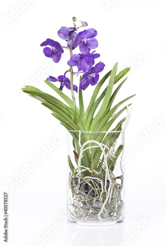 orchid e vanda dans pot en verre cylindrique photo libre de droits sur la banque d 39 images. Black Bedroom Furniture Sets. Home Design Ideas
