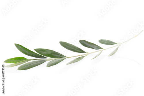 Fotobehang Olijfboom Olive twig on white, clipping path included