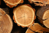 Fototapety tree stump background