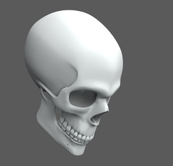 a skull with simple texture