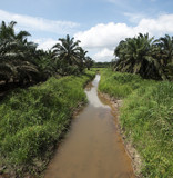 Palm oil plantation landscape