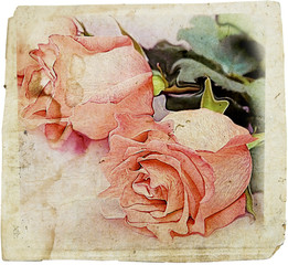 vintage rose backdrop