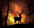 Large elk escaping a wild land fire - 40596399