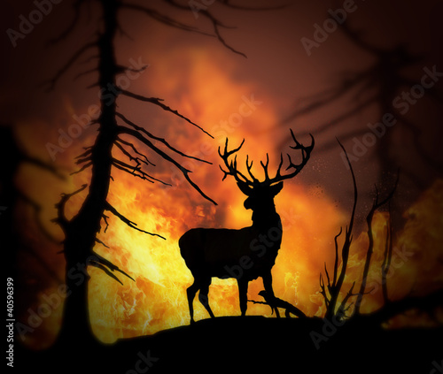 Leinwandbild Motiv Large elk escaping a wild land fire