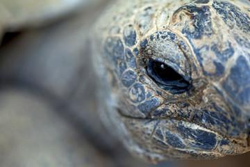 Tortue, reptile, animal, zoo, tête, nature, faune, préhistoire