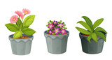 Fototapety plants.