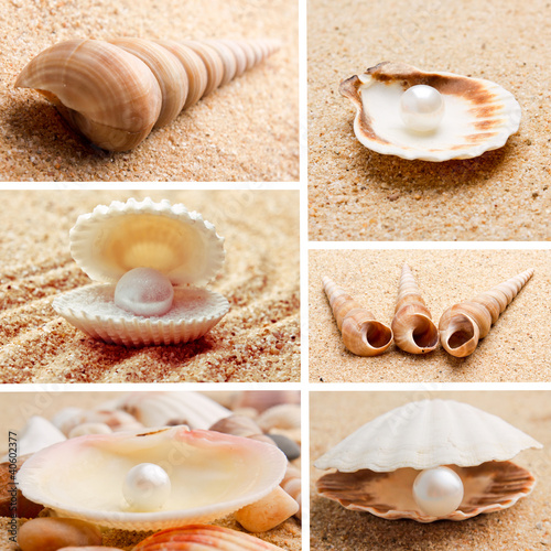 collection of seashells. pearl on the seashell