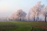 Fototapety Frost am morgen
