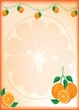 Orange vector background