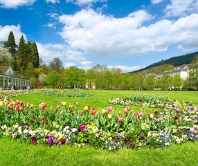 beautiful park in spring with tulip flowers blossoming