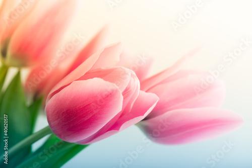 Tuinposter Lente Spring Tulips