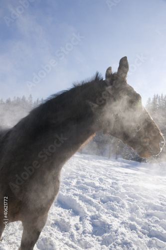 Horse on the winter range.