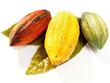 Kakao - Früchte