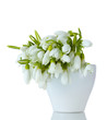 beautiful bouquet of snowdrops in vase isolated on white
