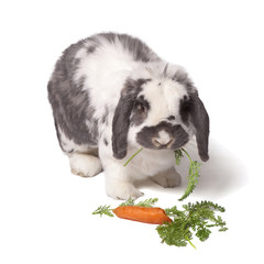 Cute Bunny Rabbit munching Carrot and Greens