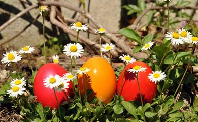 daisy eggs