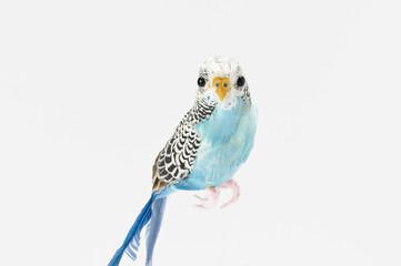鳥(白バック)