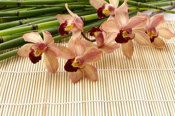 Branch orchid with bamboo grove on mat