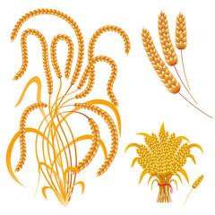 Wheat ears of corn, a sheaf of wheat