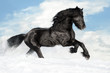 Black horse runs gallop on the snow