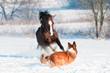 Welsh pony and dog play in winter