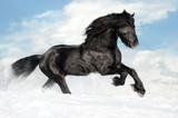 Fototapety Black horse runs gallop on the snow
