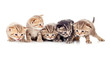 five kittens brood isolated