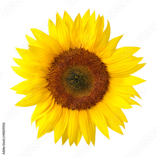Leinwandbilder,sonnenblume,blume,blume,blütenblätter