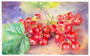 Myrtilles rouges en aquarelle