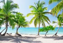 Île de Catalina en République Dominicaine