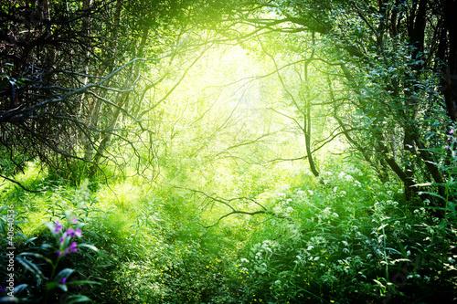 slonce-w-glebokim-lesie
