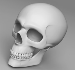 a skull with simple texture face to leftside