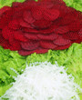 Decorative Background of Beet Radish and Lettuce
