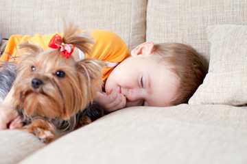 little boy sleeping and hugging loving dog york