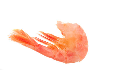 tail shrimp