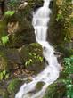 Quelle im Wald - 40648325
