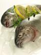 Frozen trout, closeup