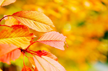 autumn orange leafs background