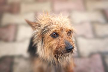 piccolo cagnolino bagnato