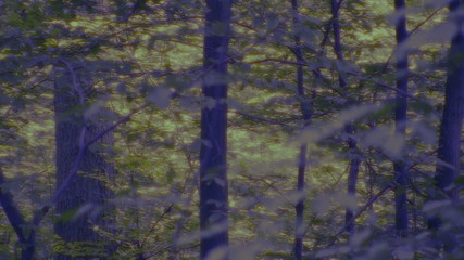 Zoom into blue, dark forest to imaginary light