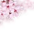 Pink spring blossom design border background