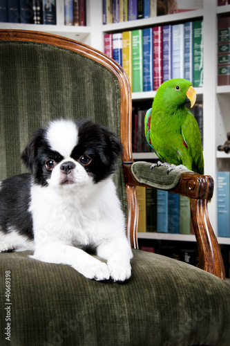 a bird and a dog
