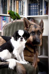 a bird and two dogs