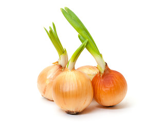 Sprouting Bulb Onions