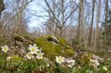 Fototapeta wiosna - liście - Roślinne