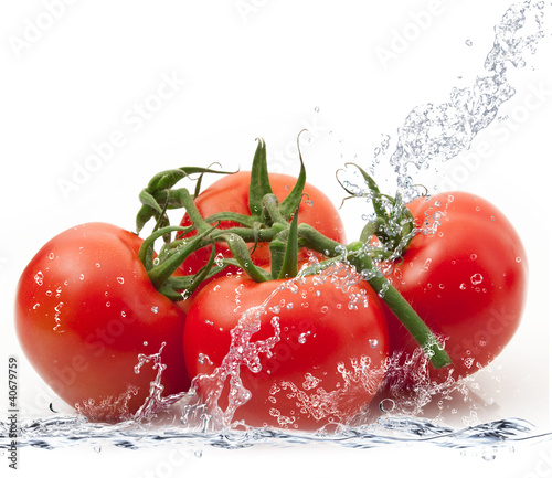 pomodori splash