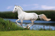 white horse on summer field